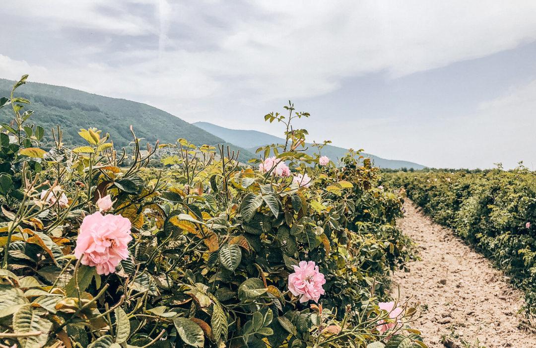 Podróż po bułgarskiej Dolinie Róż