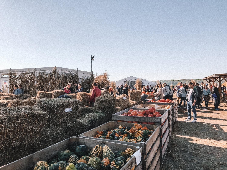 Farma Dyń pod Warszawą